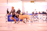 RMMF2015SpecialtyShowProofsbyBSPhotography-1739